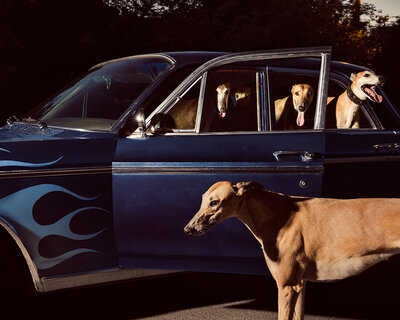 Holly Andres - Cats & Dogs