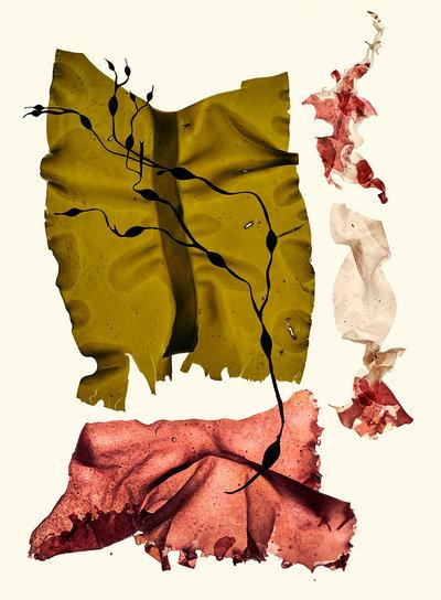 Michelle Gatton - Conceptual