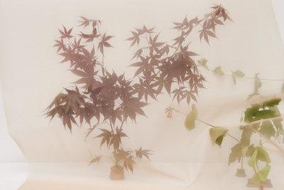 Margaret MacMillan Jones - Florals